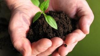 agricoltura_sostenibile_biologica